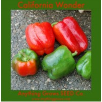 Pepper - sweet - California Wonder - Organic