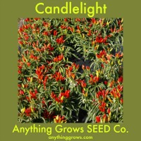 Pepper - hot - Candlelight - Organic