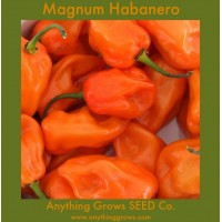 Pepper - HOT - Magnum Habanero - Organic