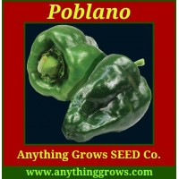 Pepper - hot - Poblano aka: Ancho - Organic