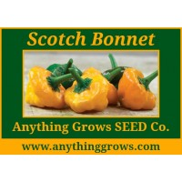Pepper - hot - Scotch Bonnet