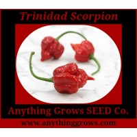 Pepper - HOT - Trinidad Scorpion