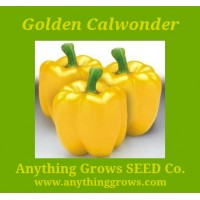 Pepper - Sweet - Golden California Wonder - Organic