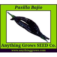 Pepper - HOT -  Pasilla Bajio