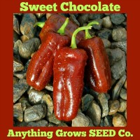 Pepper - Sweet  - Chocolate - Organic