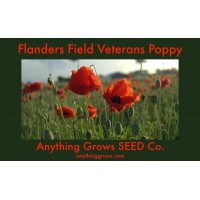 Poppy - Flanders Field - Corn Poppy