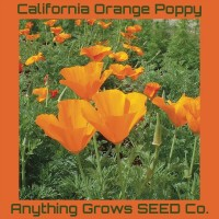 Poppy ~ California Orange - Organic