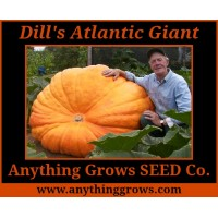 Pumpkin - Dill's Atlantic Giant