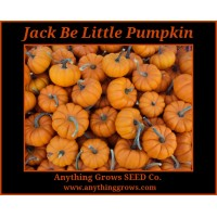 Pumpkin - Jack Be Little - Organic
