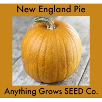 Pumpkin - New England Pie - Organic
