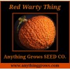 Pumpkin - Red Warty Thing - Victor