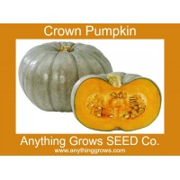 Squash - Winter - Crown Pumpkin - Organic
