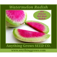 Radish - Watermelon/Chinese Red  Meat - Organic