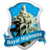 HERB - CBD Royal Highness (3-seed)