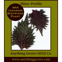 Shiso - Perilla Frutescens ~ Red Leaf