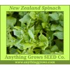 Spinach - New Zealand