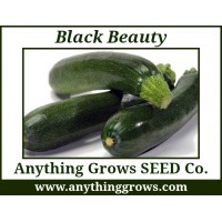 Squash - Summer - Black Beauty Zucchini