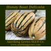 Squash - Winter - Honey Boat Delicata