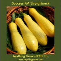 Squash - Summer - Success PM Straightneck - Organic