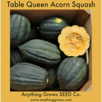 Squash - Winter - Table Queen Acorn - Organic