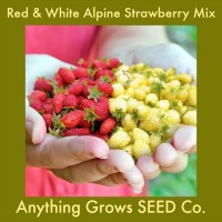 Strawberry - Red & White Alpine Mix