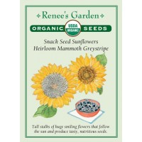 Sunflower - Mammoth Greystripe - Organic