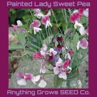 Sweet Pea - Painted Lady - Organic