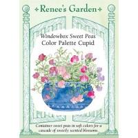 Sweet Pea - Colour Palette Cupid, Lathyrus odoratus