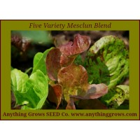 Lettuce Mix - Five Variety Blend, Mesclun - Organic