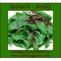 Spinach - Reddy