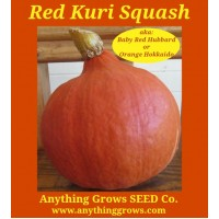 Squash - Winter - Red Kuri - Organic