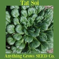 Tat Soi - Organic