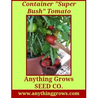 Tomato - Super Bush, Container