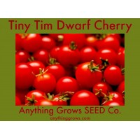 Tomato - Tiny Tim - Cherry