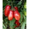 Tomato - Inca Jewels, Paste