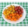 Tomato - Garden Candy Cherry Mix