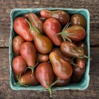 Tomato - Midnight Pear - Organic