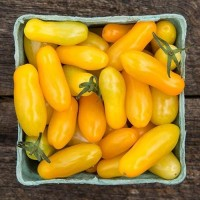 Tomato - Starlight Grape Yellow - Organic