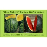 Melon - Watermelon - Doll Babies Icebox Mix - Organic