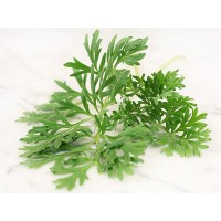 Herb - Wormwood
