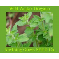 Herb - Oregano - Wild Zaatar