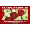 Zinnia - Canada 150