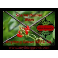 Bean - Pole - Scarlet Runner