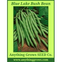 Bush Bean -  Blue Lake - Organic