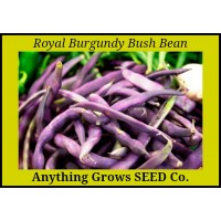 Bush Bean - Royal Burgundy - Organic