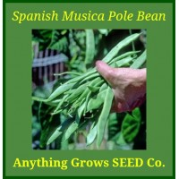 Pole Bean - Spanish Musica - Organic