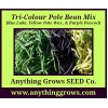 Pole Bean - Tri-Colour Mix