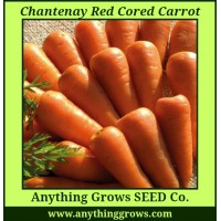 Carrot - Chantenay Red Cored - Organic