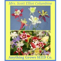 Columbine ~ Mrs. Scott Elliot