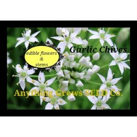 Herb - Chives,Garlic - Organic